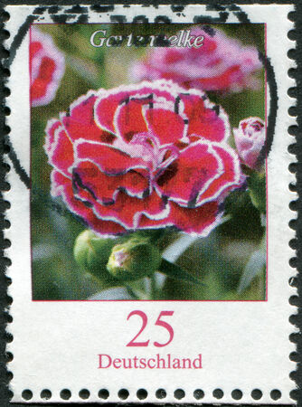 philatelist: GERMANY - CIRCA 2008: A stamp printed in Germany, shows a flower, Dianthus caryophyllus (Clove Pink), circa 2008 Editorial