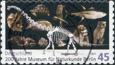 philatelist: GERMANY - CIRCA 2010: A stamp printed in Germany, is dedicated to the 200th anniversary of the Museum of Natural History in Berlin, shows a dinosaur skeleton and a variety of animals, circa 2010