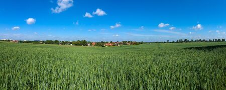 winter wheat: Winter wheat field. Rural landscape. Panoramic view. Stock Photo