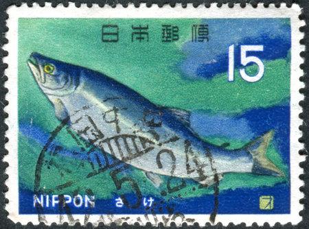 dog salmon: JAPAN - CIRCA 1966: Postage stamp printed in Japan, shows fish Chum Salmon Oncorhynchus keta, circa 1966