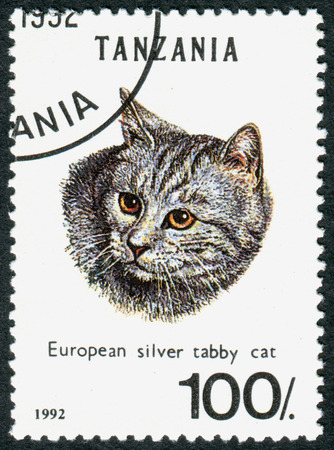 felis silvestris catus: TANZANIA - CIRCA 1992: A stamp printed in Tanzania shows the animal European Silver Tabby (Felis silvestris catus), circa 1992