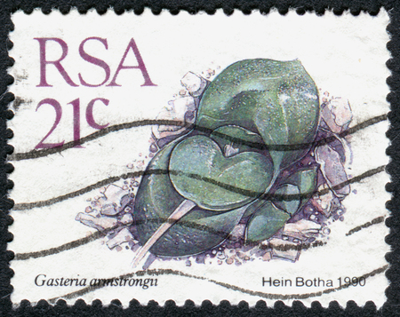 rsa: SOUTH AFRICA - CIRCA 1990: A stamp printed in South Africa, shows a dwarf succulent plant Gasteria armstrongii, circa 1990 Editorial