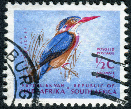 pygmy: SOUTH AFRICA - CIRCA 1961: A stamp printed in South Africa, shows a bird African Pygmy Kingfisher (Ispidina picta), circa 1961