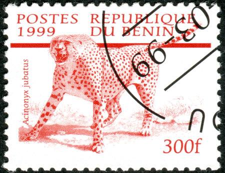 acinonyx: BENIN - CIRCA 1999: A stamp printed in Benin, shows the Cheetah (Acinonyx jubatus), circa 1999