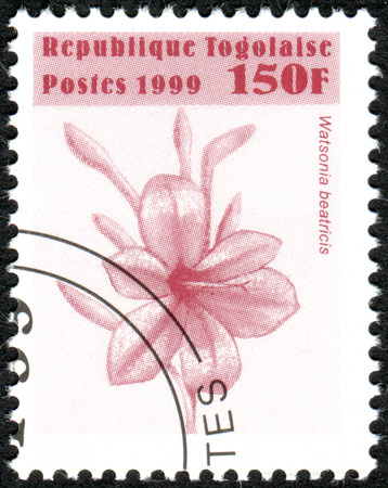 togo: TOGO - CIRCA 1999: A stamp printed in Togo, shows the flower Watsonia beatricis, circa 1999