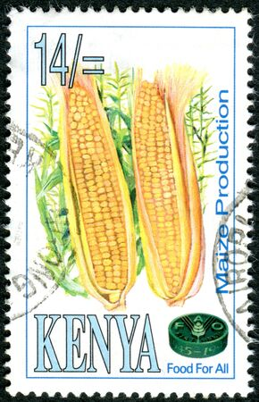 naciones unidas: KENYA - CIRCA 1995: A stamp printed in Kenya, dedicated to 50th Anniversary of the Food and Agriculture Organization of the United Nations (FAO), shows a maize, circa 1995 Editorial