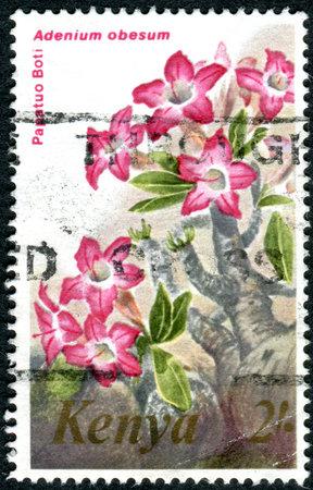 KENYA - CIRCA 1983: A stamp printed in Kenya, shows a flower Adenium obesum, circa 1983 Editorial
