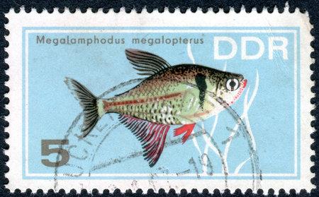 hyphessobrycon: GERMANY - CIRCA 1966: A stamp printed in Germany (GDR), shows tropical fish Black Phantom Tetra (Megalomphodus megalopterus), circa 1966 Editorial