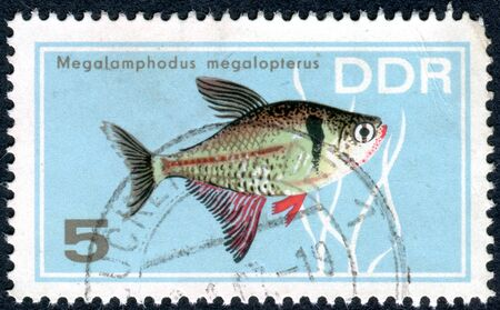 GERMANY - CIRCA 1966: A stamp printed in Germany (GDR), shows tropical fish Black Phantom Tetra (Megalomphodus megalopterus), circa 1966 Editorial