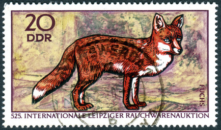 furs: GERMANY - CIRCA 1970: A stamp printed in Germany (GDR), dedicated to International Leipzig Furs Trade Fair, shows the Red Fox (Vulpes vulpes), circa 1970