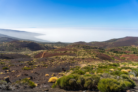 View of the valley and the forest from under the clouds. Viewpoint: Mirador La Tarta. Tenerife. Canary Islands. Spain.