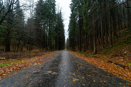 Road in the autumn forest on the slopes of the Krkonose Mountains (Giant Mountains). Czech Republic.