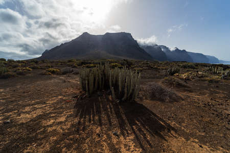 Cacti on the rocky plateau of Cape Teno. In the background, the cliffs of Los Gigantes. Tenerife. Canary Islands. Spain.
