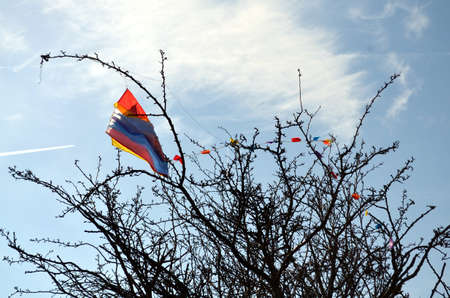 trapped: kite trapped in a tree in springtime. blue sky
