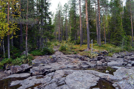 mystical forest: Mystical forest with rocks in ulefoss, norway, autumn