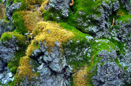grown up: close up of tree bark grown with moss