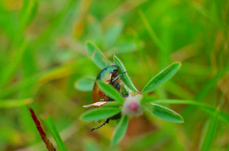 Closeup bug life on flower plant in green blurred background, nature life, nature background