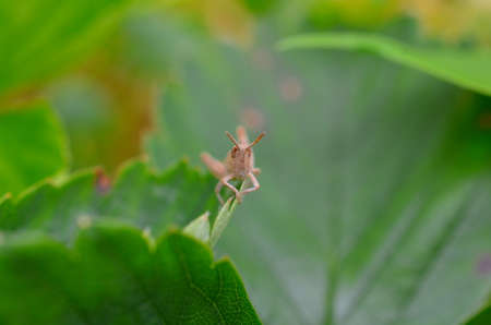 closeup of a grasshopper sitting on a green plant Stock Photo
