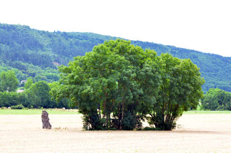 megaliths: trees on a weathfield with a menhir in france Stock Photo