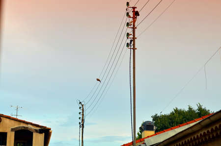 telegraphs: bird sitting on contact wire during sunset, france