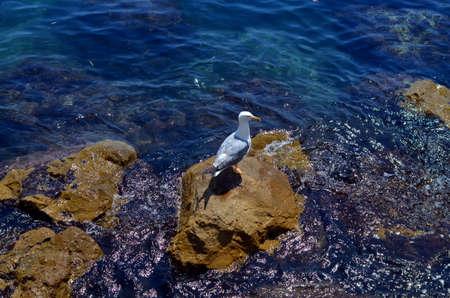 white seagull sitting a the blue coast of sea