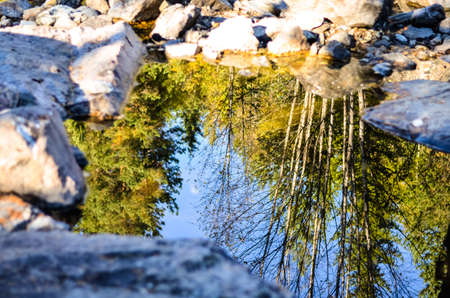 reflections of forest trees in clear puddle with rocks around Stock Photo - 66786468
