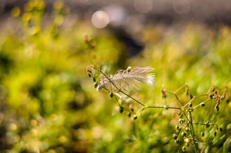 a birds feather hanging on autumn plant