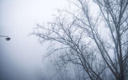 trees in foggy winter landscape scenery