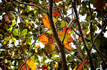 deatil: The leaves of mangrove trees on a sunny day.