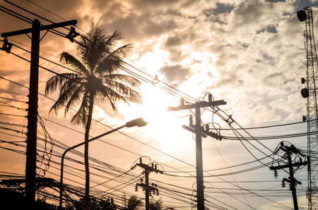 coconut palm trees and electric cable in evening sun Stock Photo