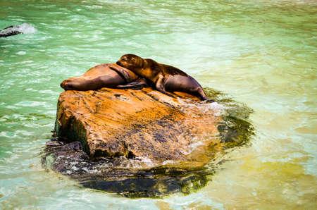 two seals cuddling in sunlight on a rock