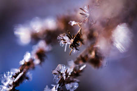 ice crystals growing in winter Stock Photo