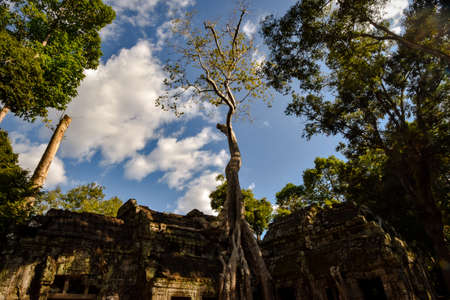 giant Banyan tree roots over Ta Phrom temple, Angkor, archaeological park, Cambodia Stock Photo