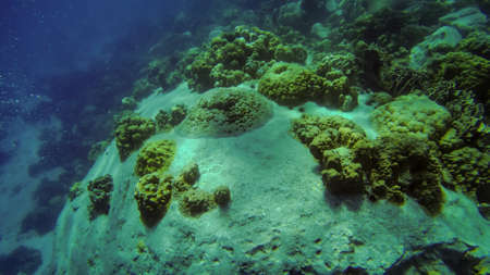 tropical Coral reef underwater growing on stones and floor