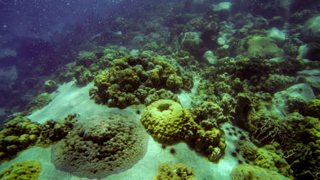 tropical Coral reef underwater growing on stone Stock Photo