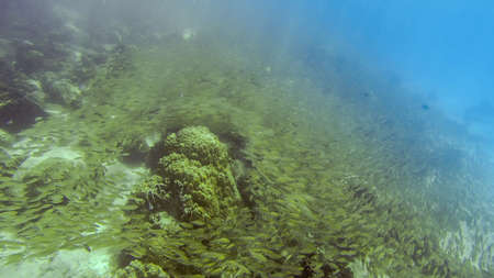 fish swarm at the ground of tropical ocean water