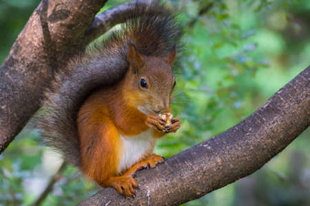 squirrel: The photograph shows a squirrel