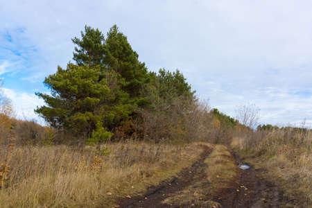 plantando arbol: La foto muestra un campo, plantaci�n de �rboles y la carretera. Foto de archivo