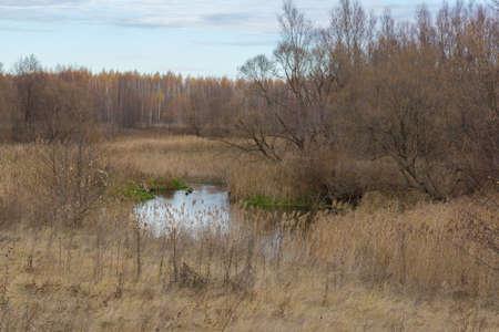 plantando arbol: La foto muestra un campo, plantación de árboles y la carretera. Foto de archivo