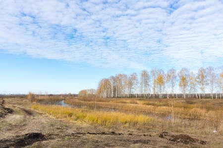 plantar árbol: La foto muestra un campo, plantaci�n de �rboles y la carretera. Foto de archivo