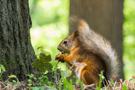 ice age: The photograph shows a squirrel near a tree
