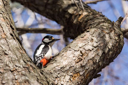 depicts: The photo depicts a woodpecker on a tree