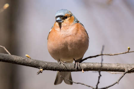 depicts: The photo depicts a finch on a branch Stock Photo