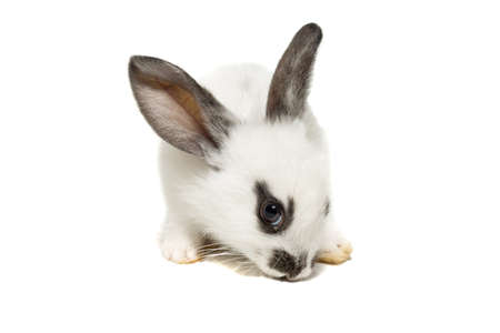 depicts: The photo depicts a rabbit on a white background