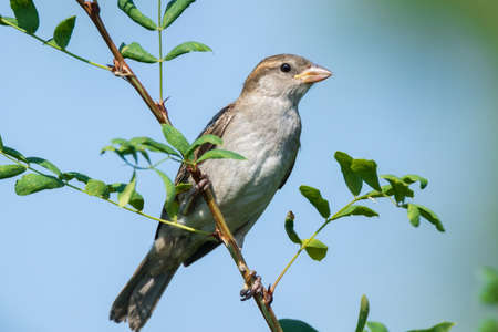 depicts: The photograph depicts a young sparrow on branch