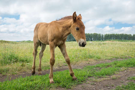 depicts: The photo depicts a smiling foal in the meadow