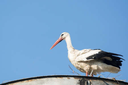The photograph shows a stork in a nest