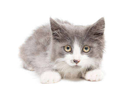 depicts: The photo depicts a kitten on a white background
