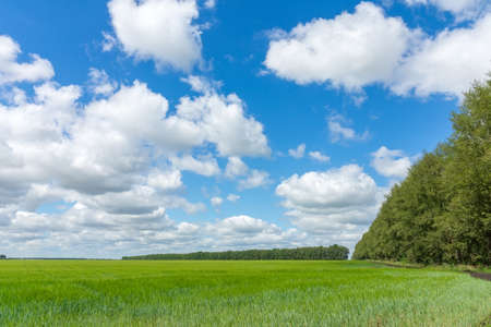 The photo depicts a field of green grass
