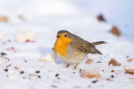 The photo shows a robin on a branch Stock Photo